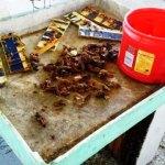 2014-09-22 13.21.08 scraping propolis