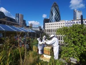 beehive urban farming
