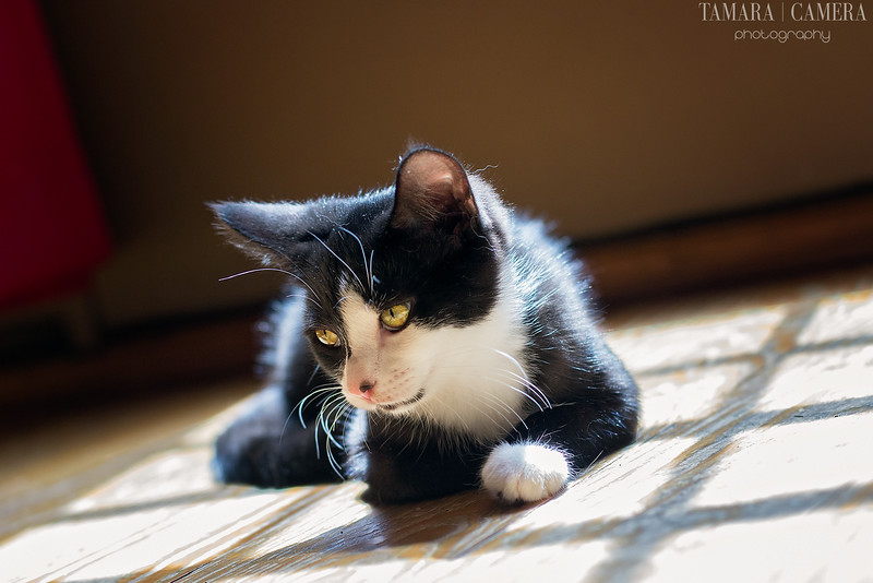 Purina Muse® Natural Cat Food