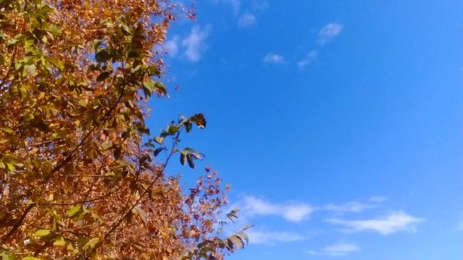 "ALT: ""jesen"""