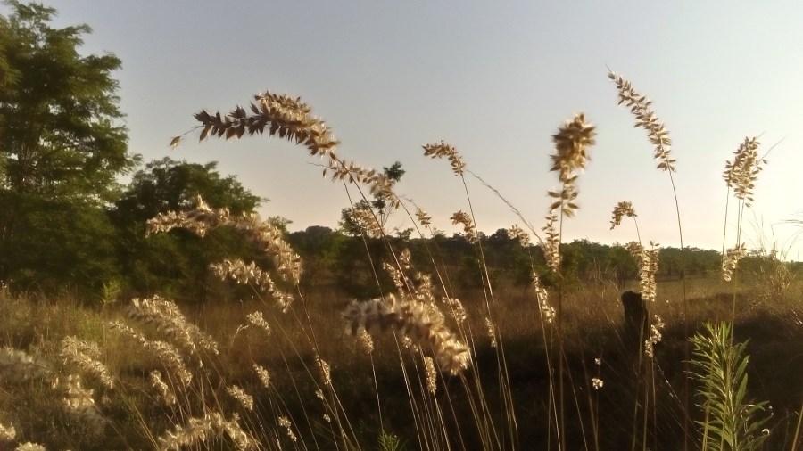 Dete zemlje, sunca i livada