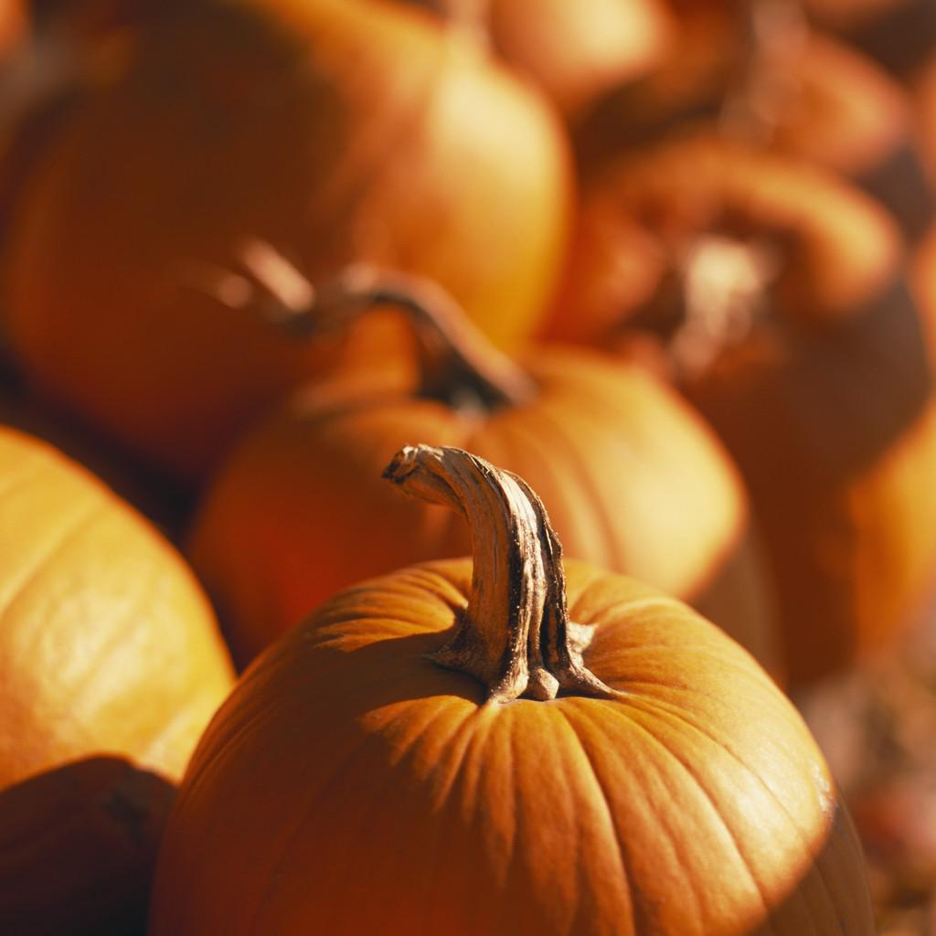 Pumpkins Gallore