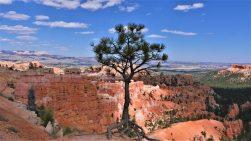 bryce-arbre
