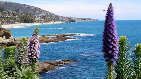 fleurs californie