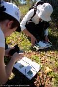 A identificação das espécies no campo