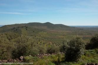 O olival e as serras