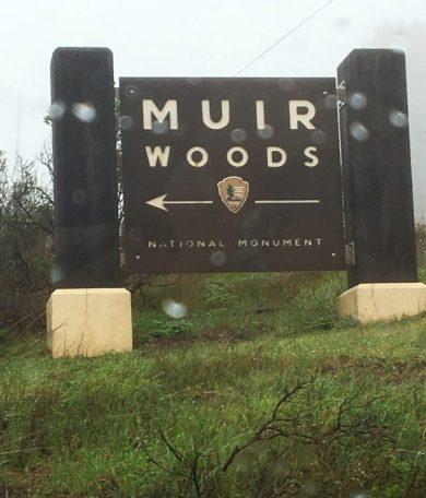 Muir Woods in California