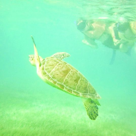 Swimming with sea turtles near Tulum, Mexico