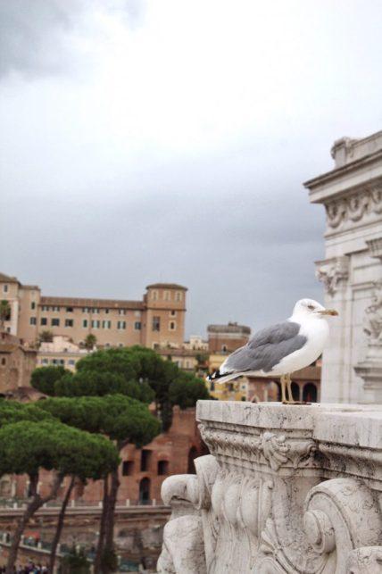 Seagull sitting at the Altare della Patria in Rome Italy