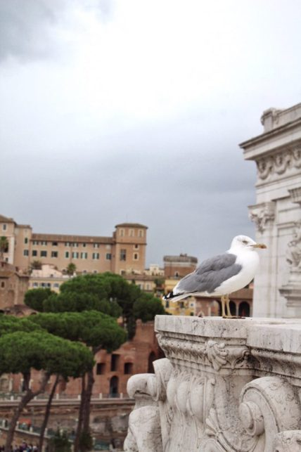 Seagull sitting at the Altare della Patria in Rome Italy