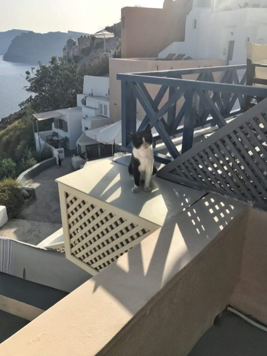 Greek cats at our Airbnb in Santorini