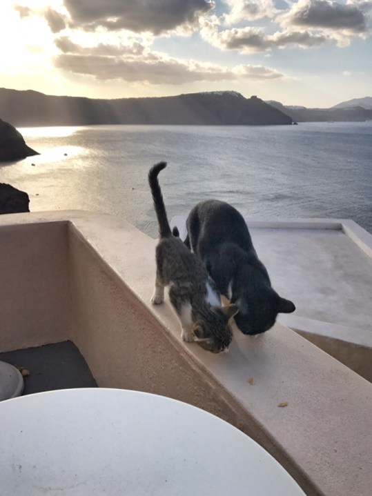 View from AirBnb in Santorini with Greek cats