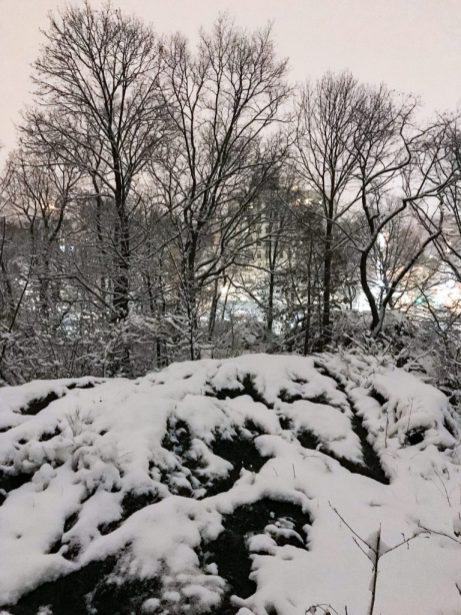 Central Park in New York City in the snow