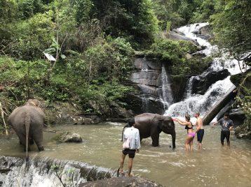 Washing elephants in Thailand