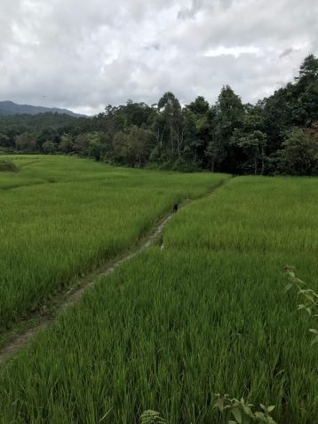 Landscape in Chiang Mai, Thailand