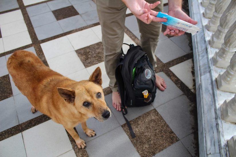 Temple dog at Wat Phra That Doi Suthep Chiang Mai