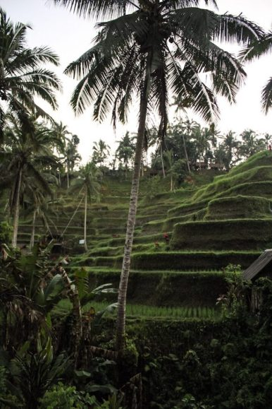Starting the walk through Tegalalang Rice Terraces in Ubud, Bali