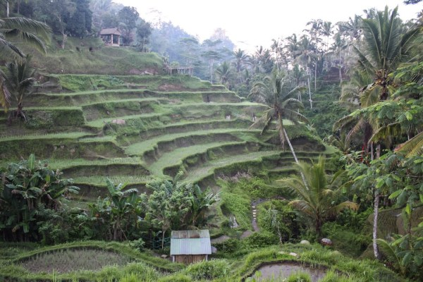 View of Tegalalang Rice Terraces in Ubud Bali
