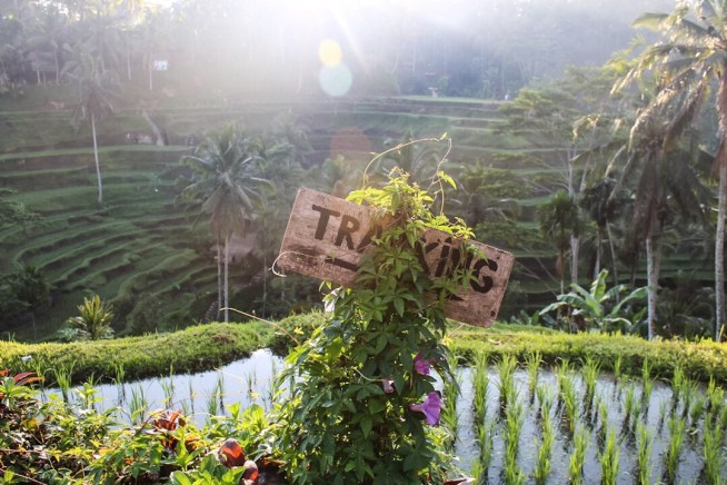 Trekking sign with sunlight coming through the trees Tegalalang Rice Terraces Ubud Bali