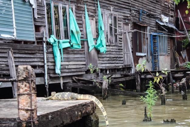 Asian water monitor in Bangkok Thailand