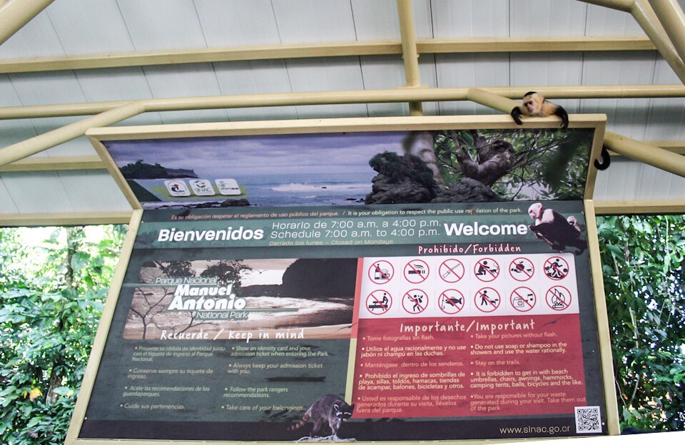 Monkey hanging on a sign at Manuel Antonio National Park