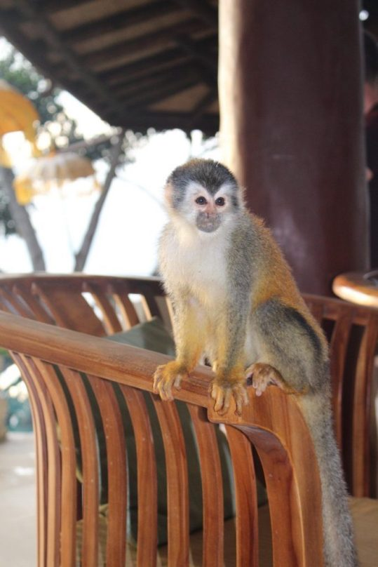 A monkey inside our VRBO in Manuel Antonio