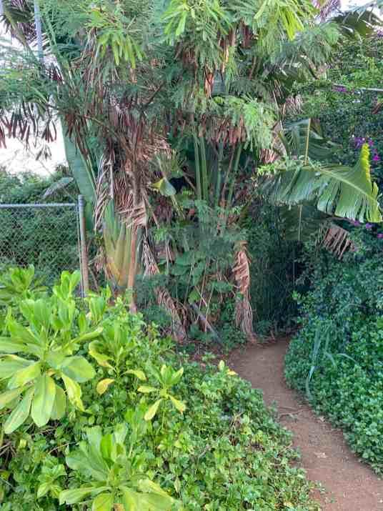 queens bath trail head kauai