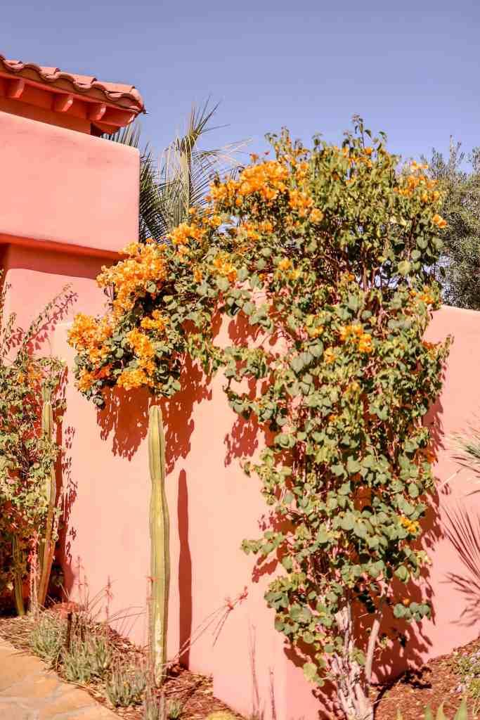 palm springs flowers
