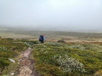 Mellan Svalåtjakke och Fältjägaren