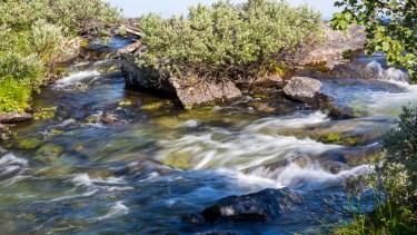 Bäcken utgör gränsen till nationalparken