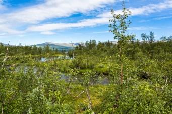 Utsikt mot Norra Storfjället