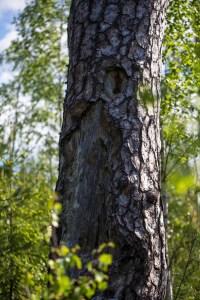 Hål i värkträdet