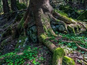 Båsbergets naturreservat