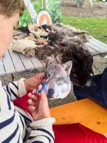 Wolves School Festival Hohe Tauern Uttendorf 4196