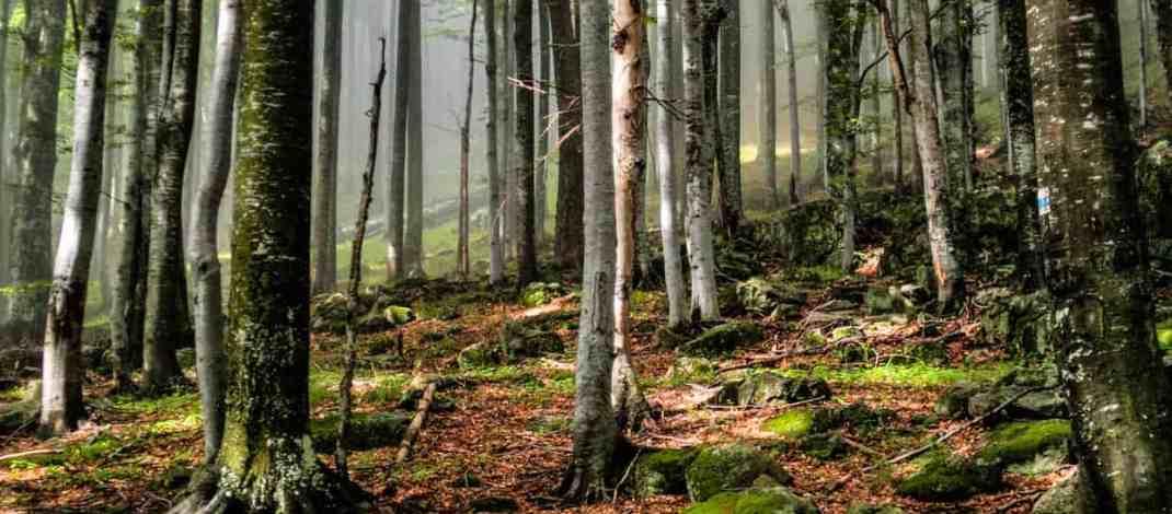 EWS - Central Balkan Wilderness -09042_.jpg