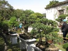 Bonsai Garden - Suzhou