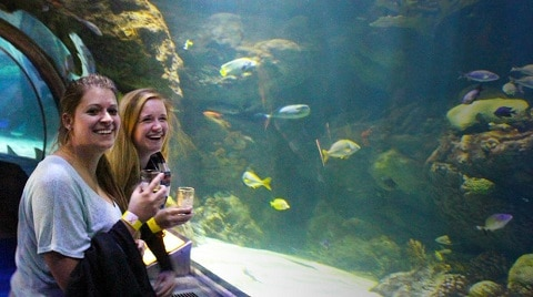 Women drinking beer in underwater tunnel