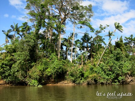 Daintree River 3
