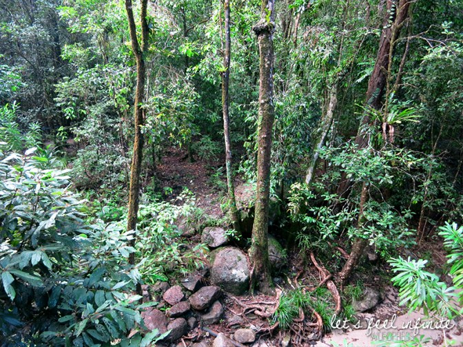 Mossman Gorge - Forest 1