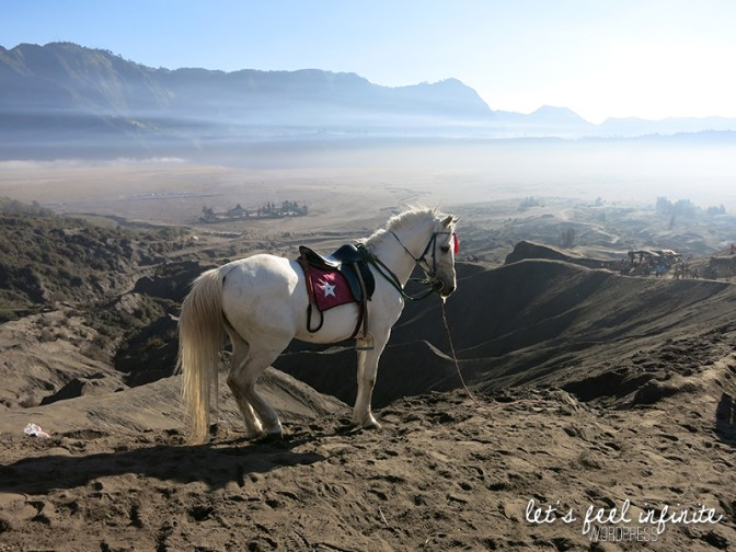 Cheval pour monter le Mont Bromo