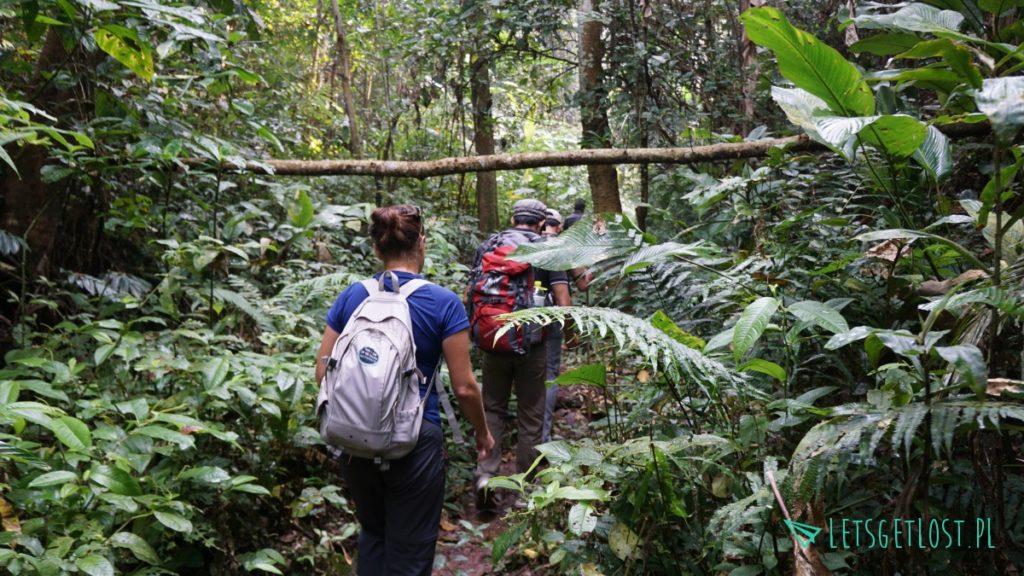Trekking w laotańskim Luang Namtha