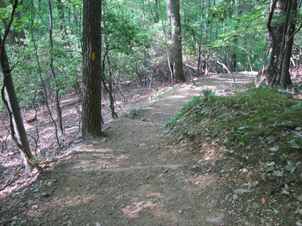 a dirt trail curving to the right with trees and brush to the left and right