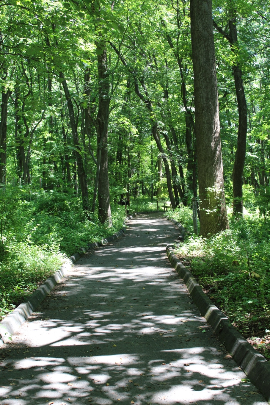 a paved path into the woods