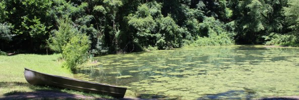 a pond with algae floating on the surface, surrounded by trees, with a rowboat on the land in the foreground