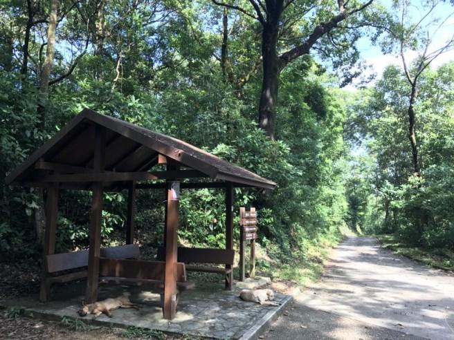 大埔滘自然教育徑 – 紅、藍、黃、啡路及山火瞭望台