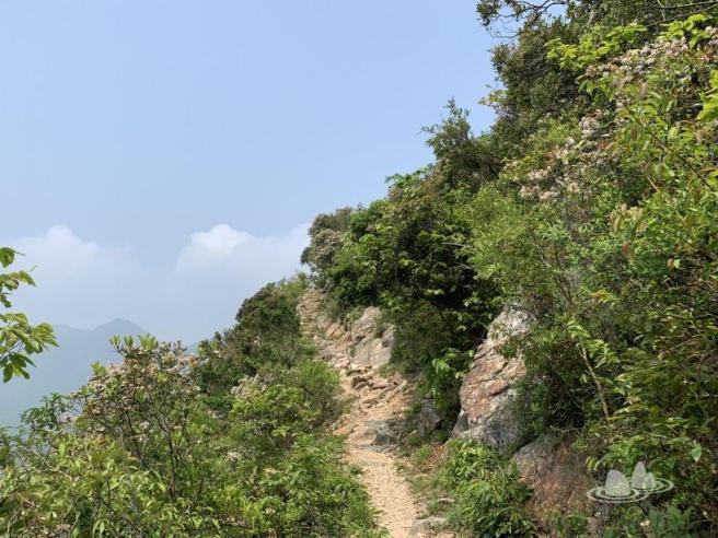 嶼南道>石壁郊遊徑>西狗牙嶺>閻王壁>小鳥回頭石>斬柴坳>鳳凰徑第3段>昂坪
