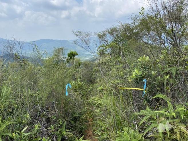 Hiking 4.10.2020 Fung Hang (26)