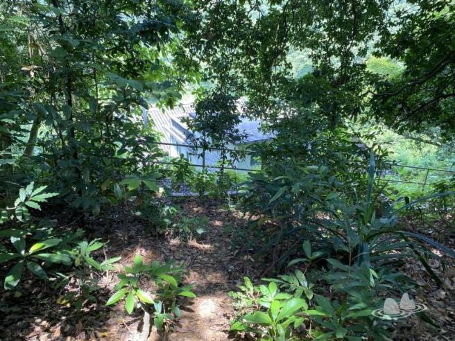 Hiking 4.10.2020 Fung Hang (37)