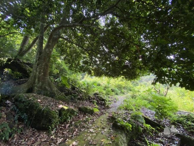 Hiking 4.10.2020 Fung Hang (46)