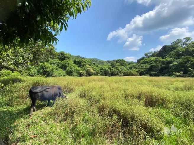 Hiking 4.10.2020 Fung Hang (54)